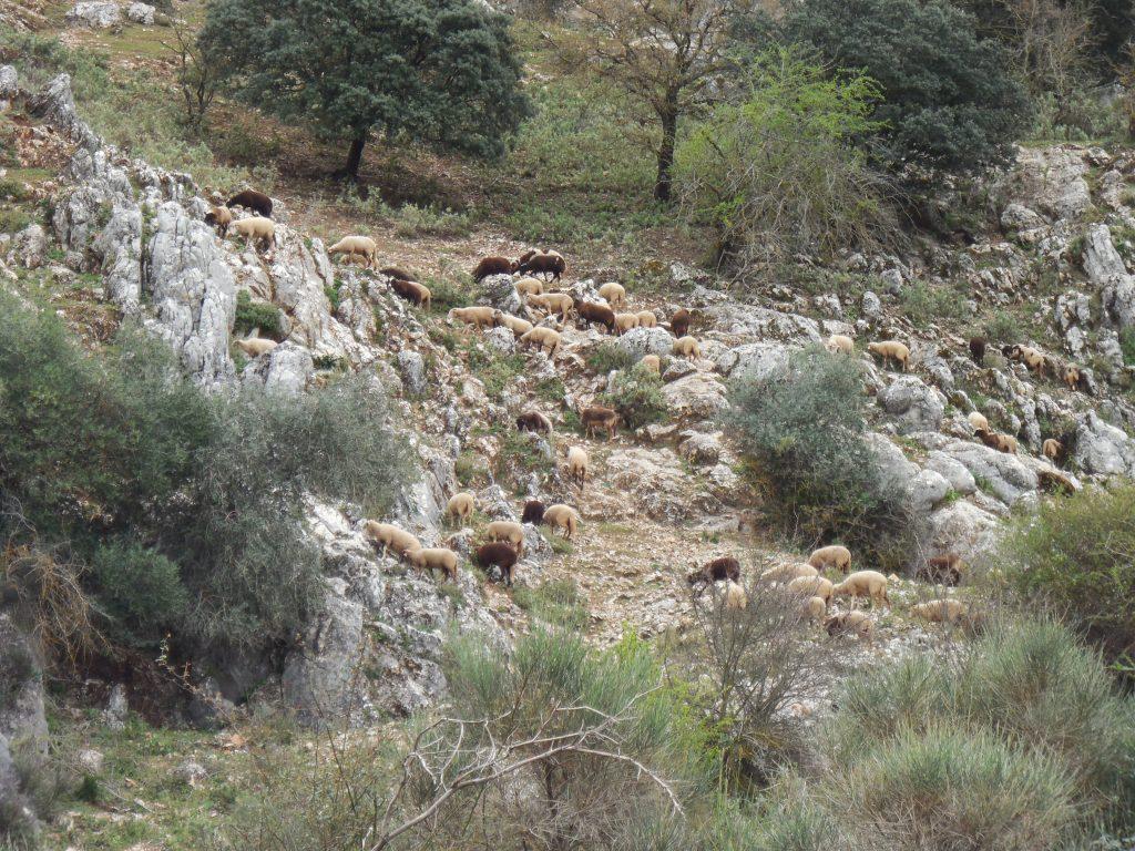 villanueva_huerta_pequena_rural_andalucia_montefrio